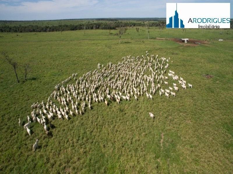 fazenda tocantins - fa00013
