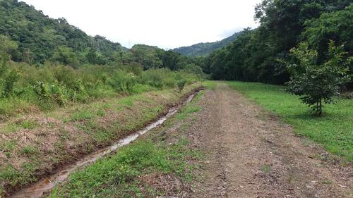 fazenda ubatuba-sp -382,8 ha - também para reserva/carbono