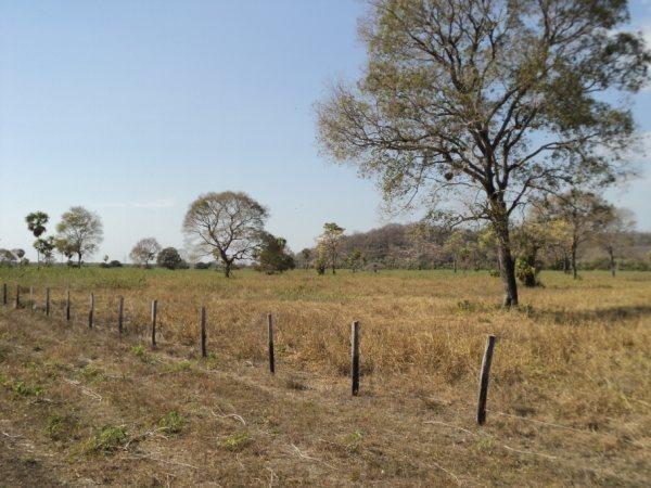 fazenda à venda, 6.937 há  por r$ 17.000.000 - centro - corumbá/ms - fa0207