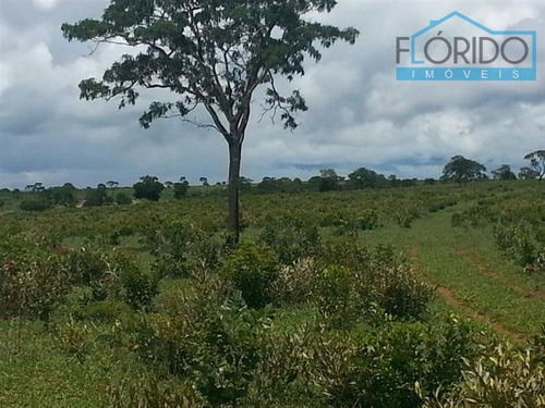 fazendas à venda  em horizonte do oeste/mt - compre o seu fazendas aqui! - 1392784