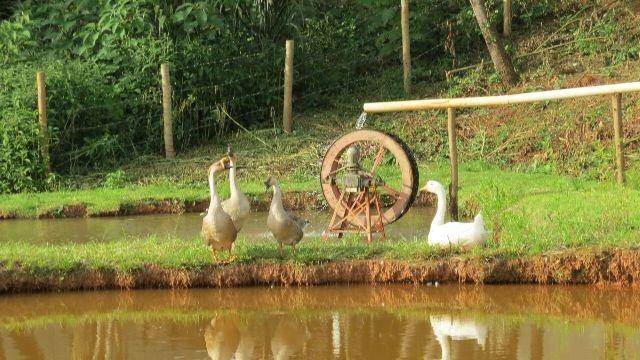 fazendinha com 4 quartos para comprar no zona rural em entre rios de minas/mg - 1042