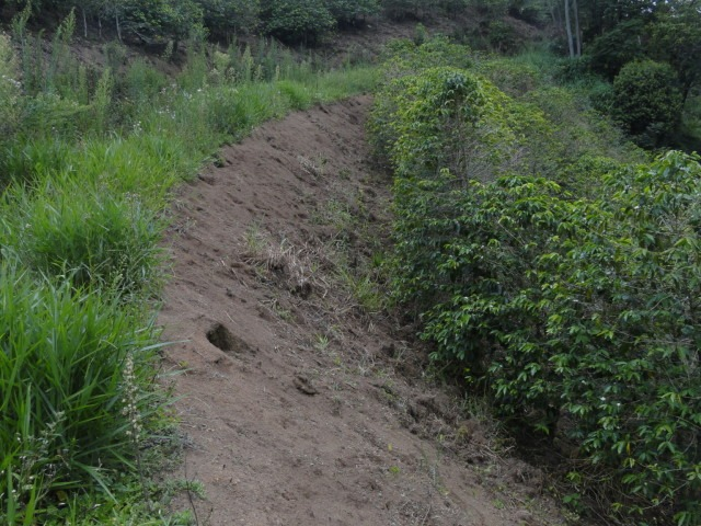 fazendinha com 78 ha no sul de minas , com café orgânico carmo de minas, mg. boa de água... - 138
