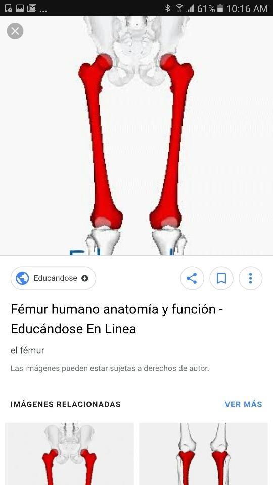 Asombroso Agujeros De La Anatomía Y La Fisiología Concursos Galería ...