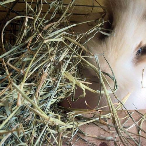 feno coast cross  a para porquinho,coelho chinchila 1kg