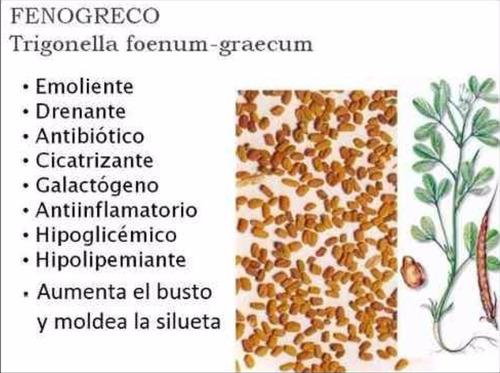 fenogreco alholva trigonella foenum-graecum. en cápsulas