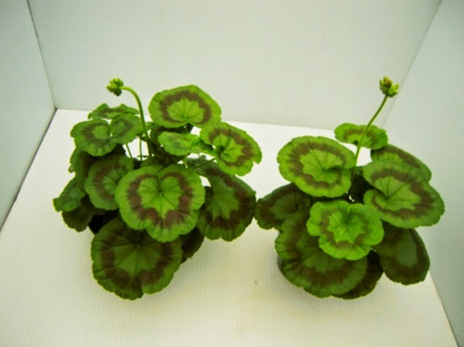 Fertilizante para bons i plantas rboles frutales 170 for Plantas frutales