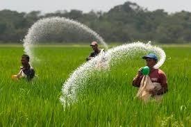 fertilizante  urea bolsa 1 kg