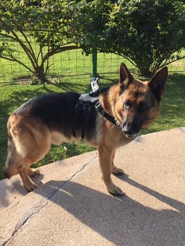 fetch (arné para perros)