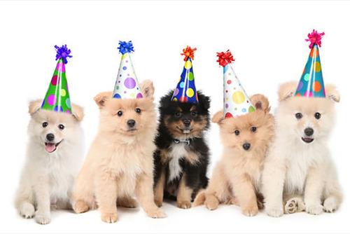 fiesta de perros test