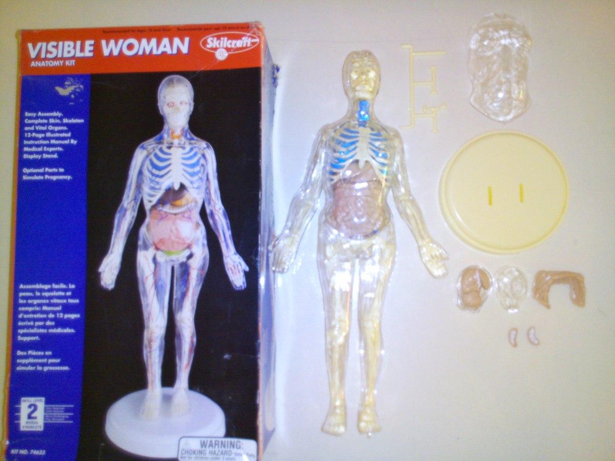 Figura De Cuerpo Humano Femenino Usada. - $ 650.00 en Mercado Libre