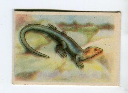 figurita starosta año 1953 - animales - lagarto