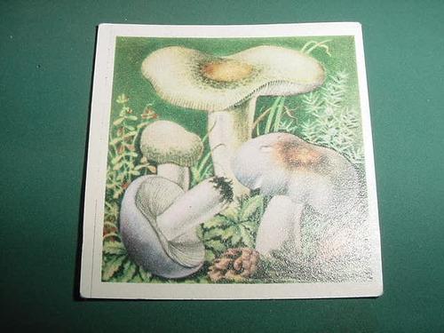 figuritas album maravillas de la naturaleza hongos nro. 113