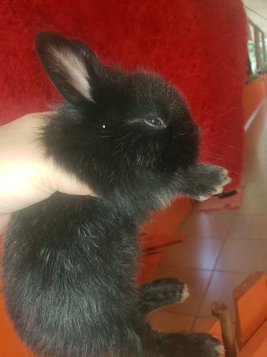 filhote de coelho