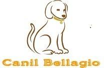 filhotes de golden retriever canil bellagio
