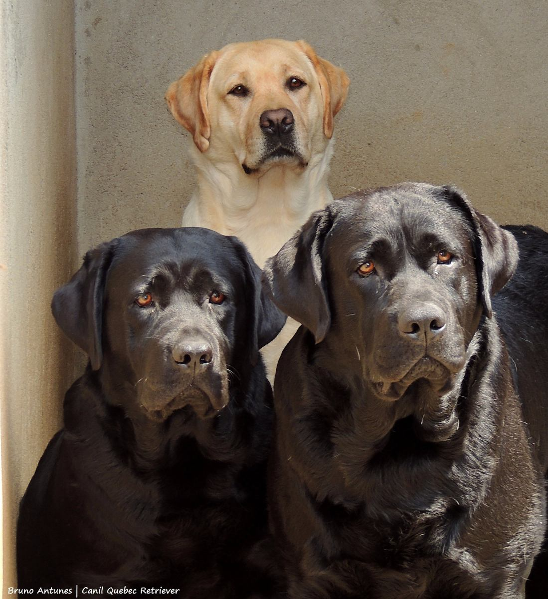 Black Dog Pictures