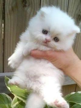 Frases Bonitas Sobre Gatos Pretos Gongsyim