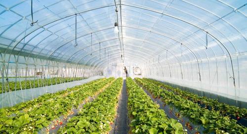 filme plastico para estufa agricola 10m x 15m  150 micras tp