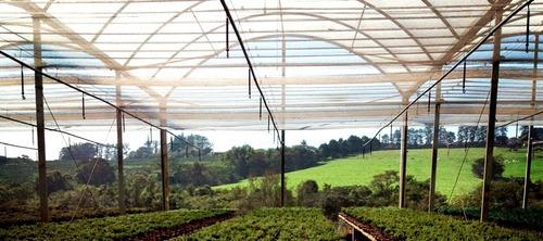 filme plástico para estufa - agrícola - 4m x 5m - 100 micras