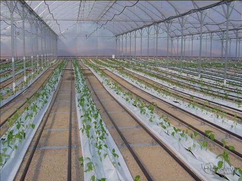 filme plástico para estufa agrícola 6m x 50m - 150 micras