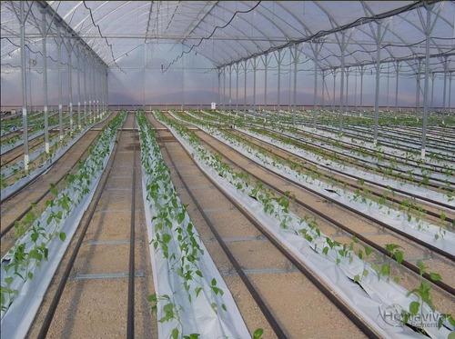 filme plastico para estufa agricola 8m x 105m - 100micras
