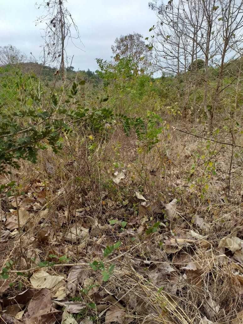 finca 16 hectáreas semiplana en vía a la costa