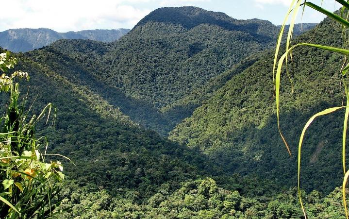 finca 20 hectareas en oreamuno de cartago