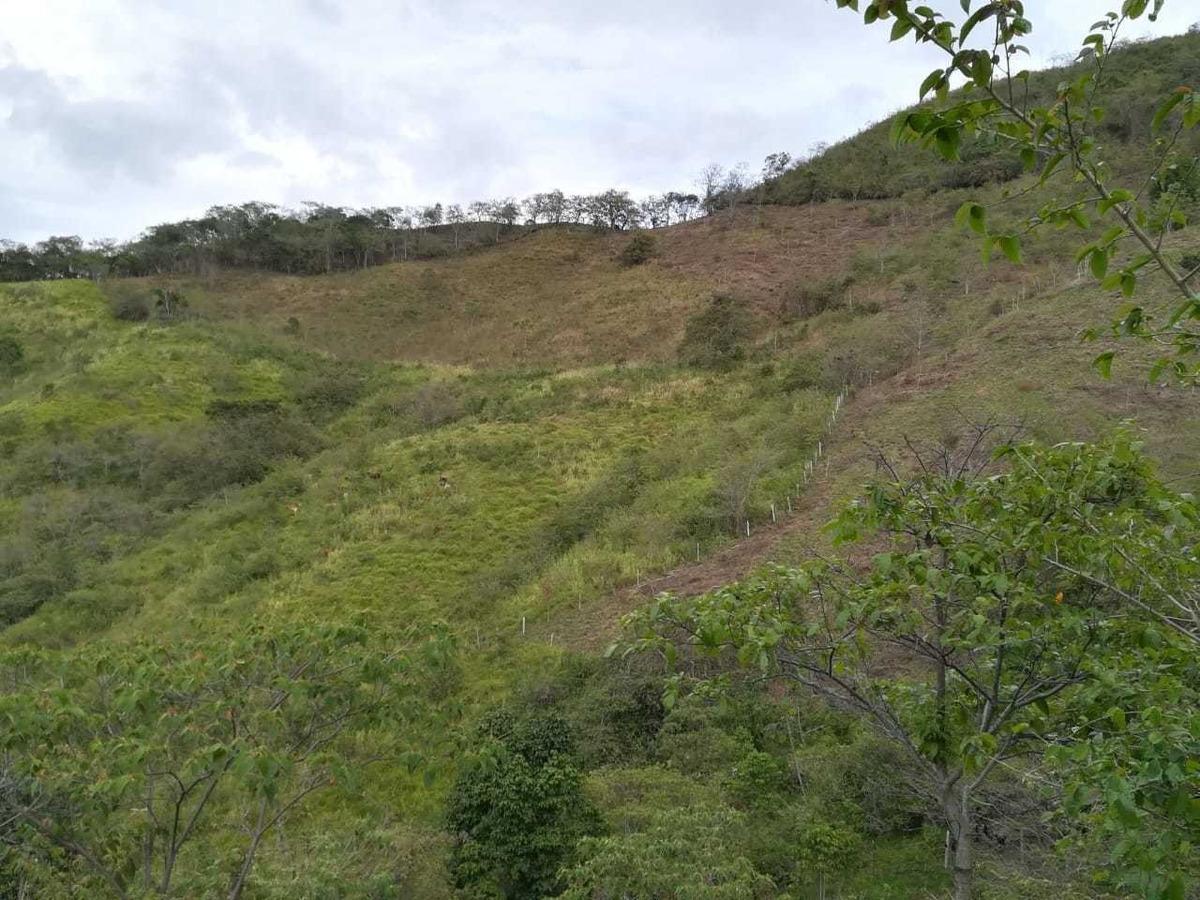 finca 35 fanegadas para ganadería en bituima cundinamarca