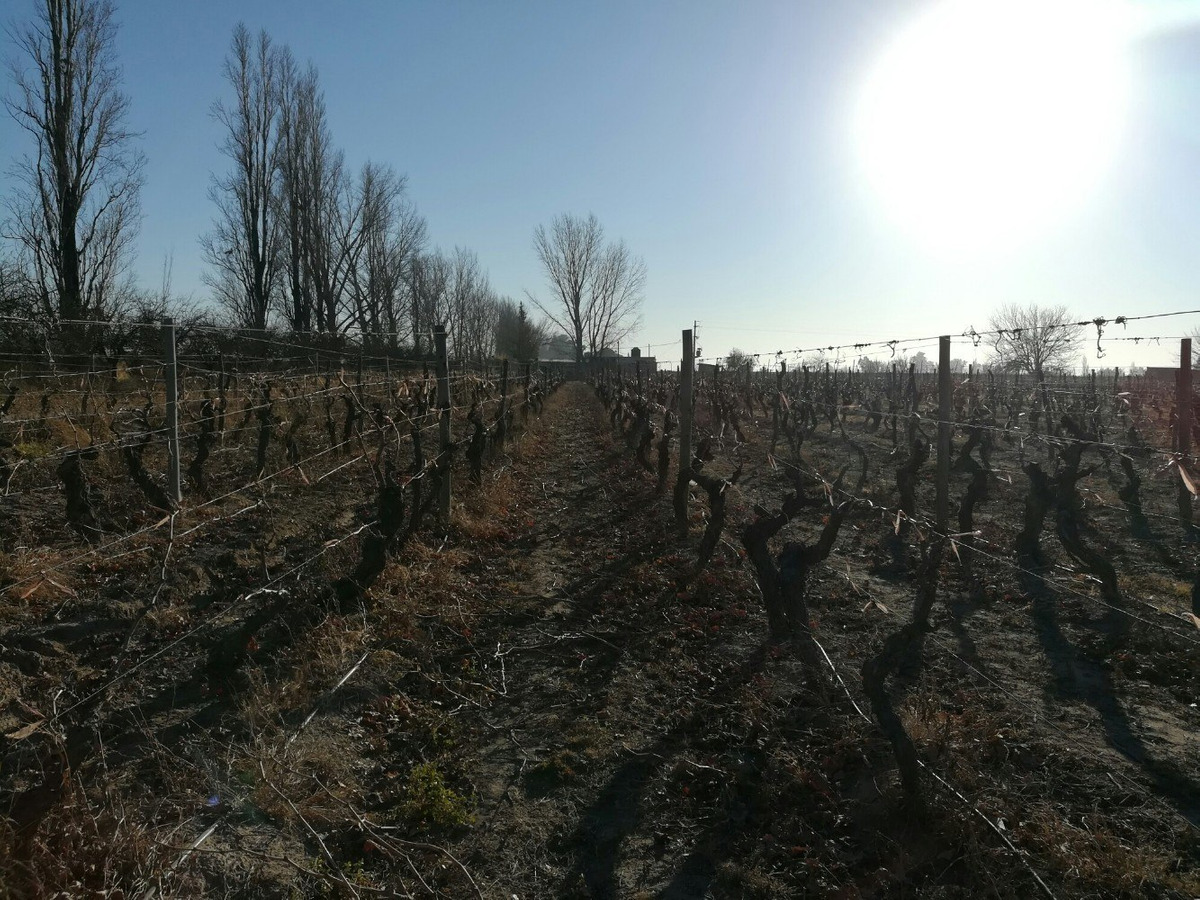 finca 46 ha vid sobre ruta nacional 7 san martin mendoza