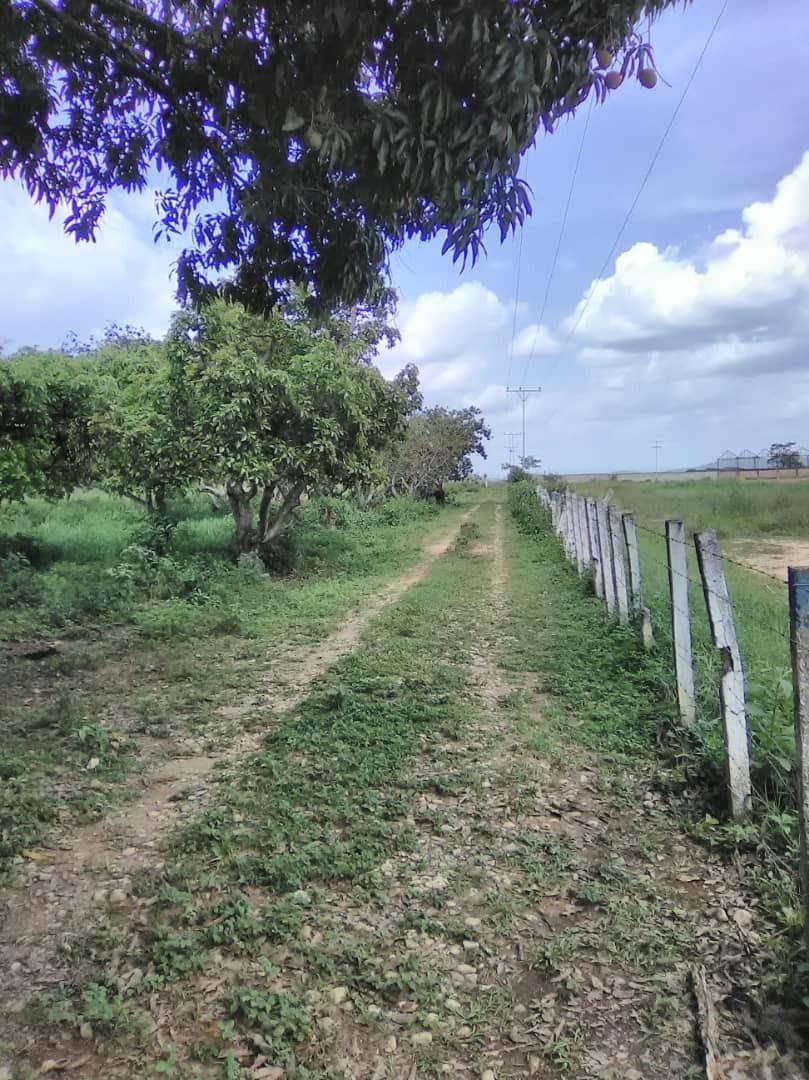finca al lado de agroaventuras tinaquillo 04145831984