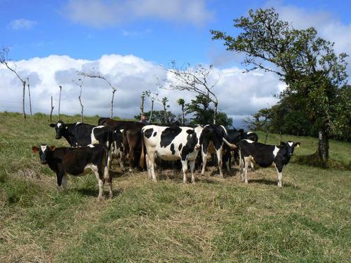 finca alto villegas ganadería leche hortalizas