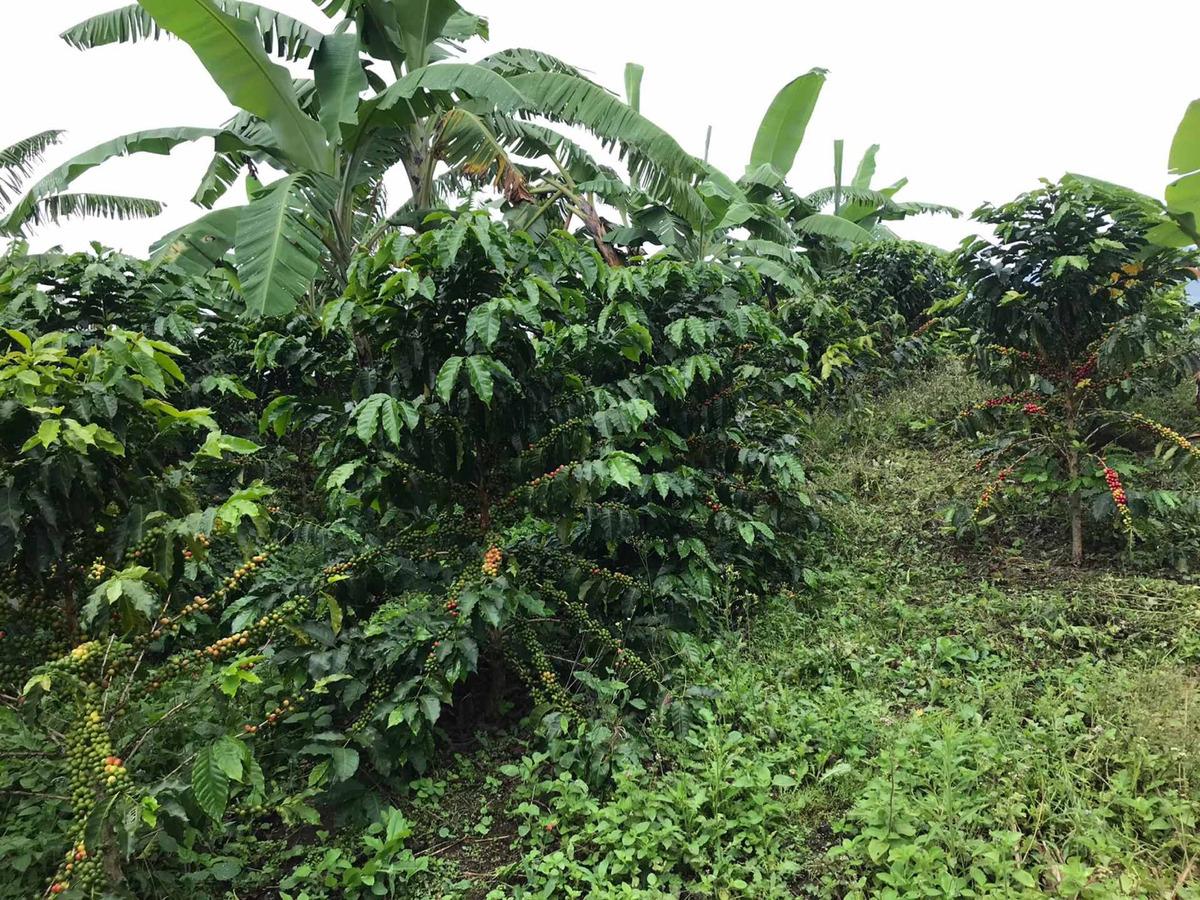 finca cafetera de 3 hectáreas