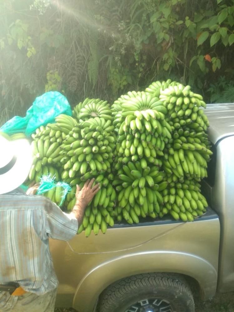 finca cafetera en caicedonia aguacate limon banano bosque ar