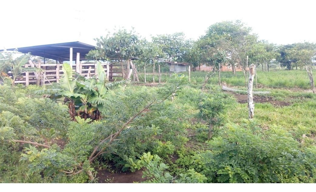 finca de  13 hectáreas  y un lote de 4 hectáreas