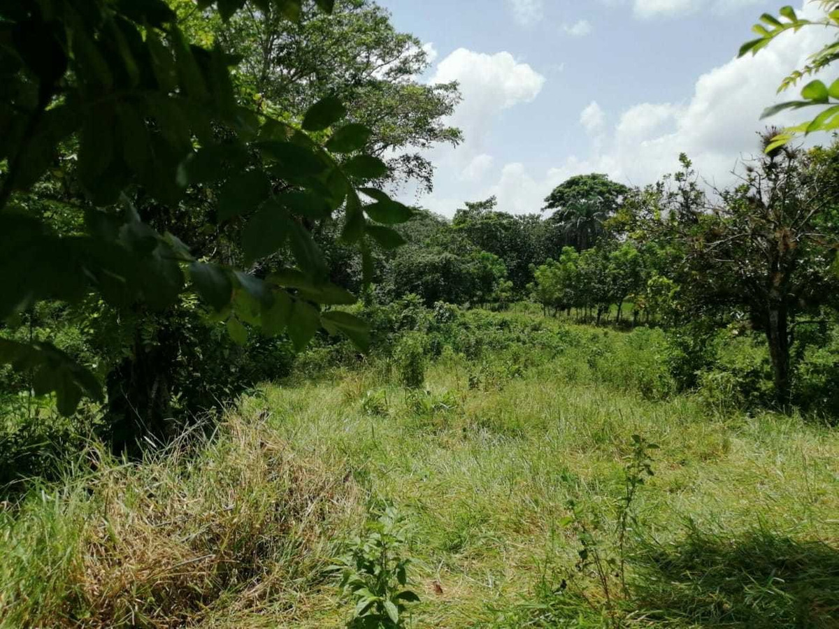 finca de 18,000 tareas ganadera en bayaguana