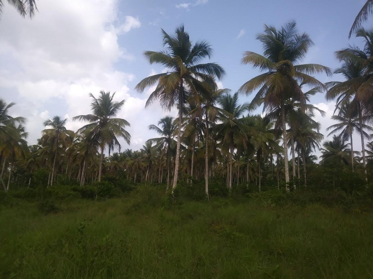 finca de 18,000 tareas sembrada de coco en monte plata