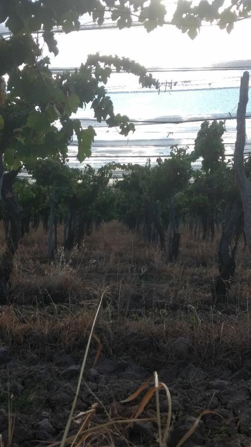 finca de 42 ha en bombal- san rafael- mendoza