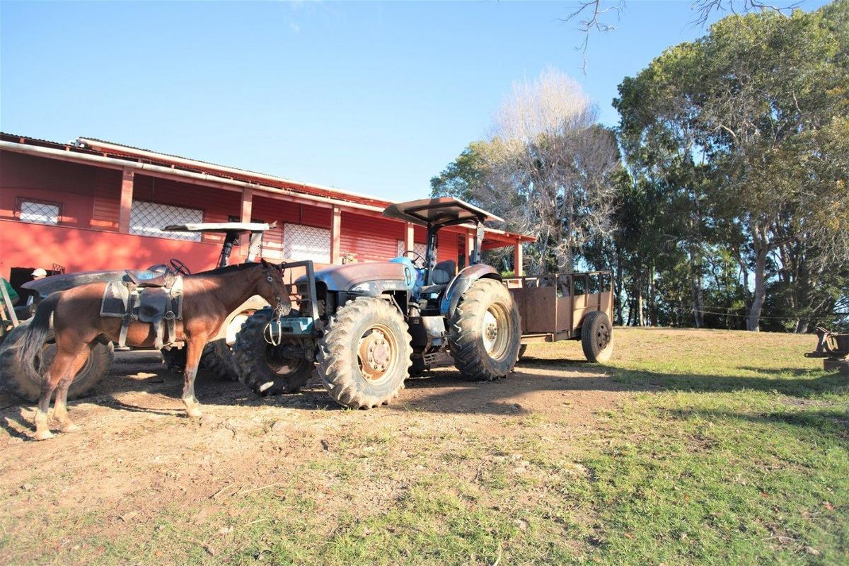 finca de 5,232 tareas ganadera y agrícola en hato mayor