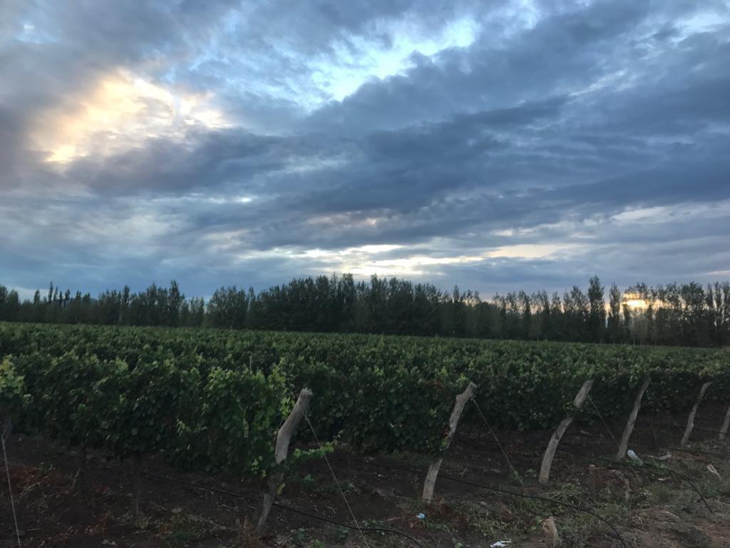 finca de 55 hectareas - cuadro benegas- san rafael