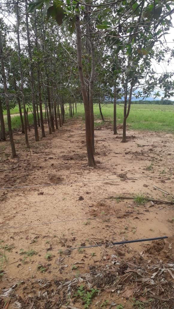 finca de 6 hectareas y media