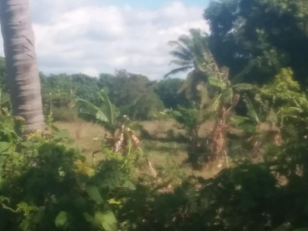 finca de 96 tareas en alquiler agrícola en el llano  baní