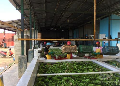 finca de guineos en santiago rodriguez - ar0403
