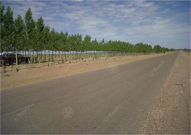 finca de viñedos con 30 has plantadas y 50 con agua para plantar + 220 incultas