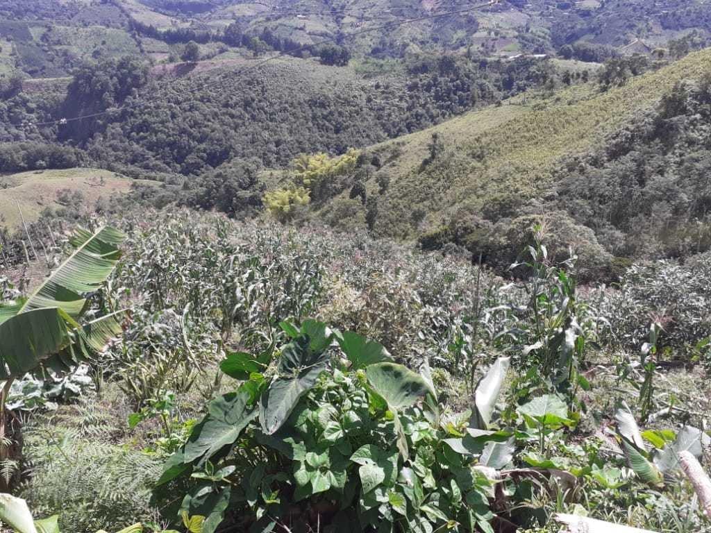 finca dos hectareas 300 palos aguacate
