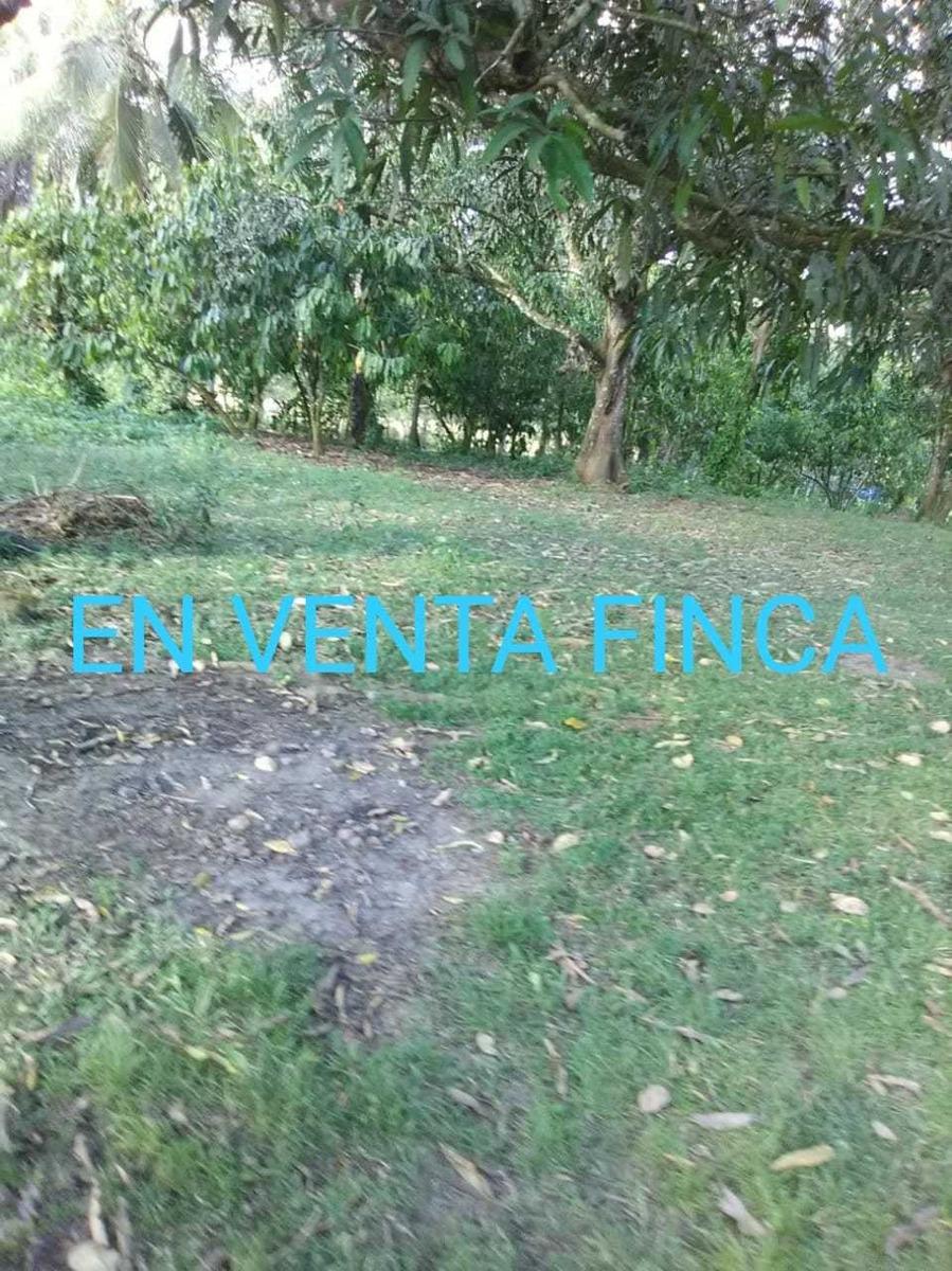 finca en bayaguana de 320 tarea