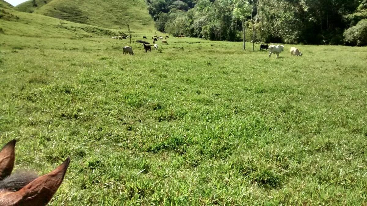 finca en san carlos 280 hectáreas