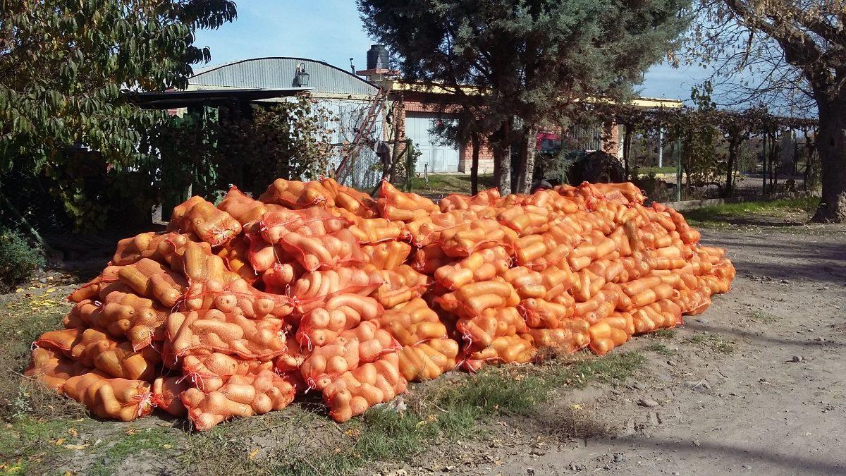 finca en san rafael con producción de pistachos, duraznos .