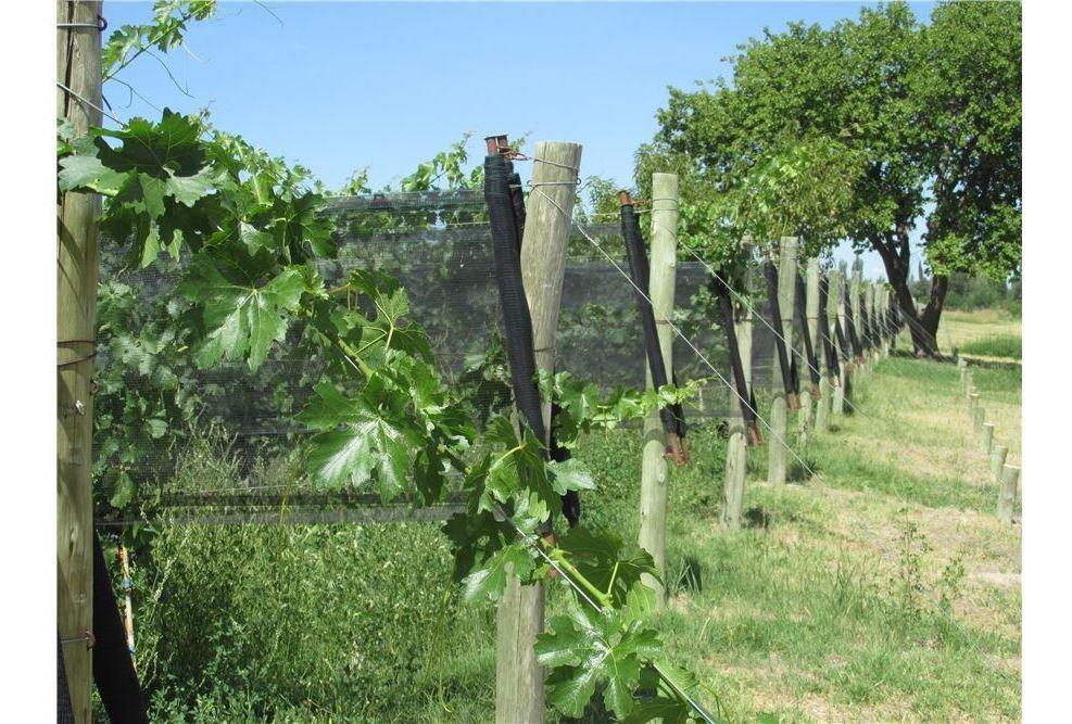 finca en san rafael - viñedos en producción