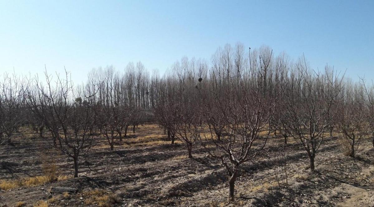 finca en venta 11,6 hectáreas -san rafael - mendoza