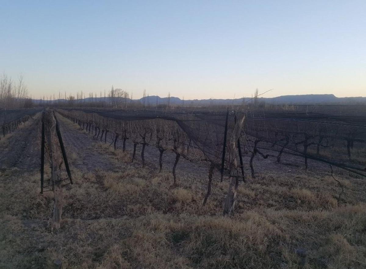finca en venta 14 hectáreas -san rafael - mendoza