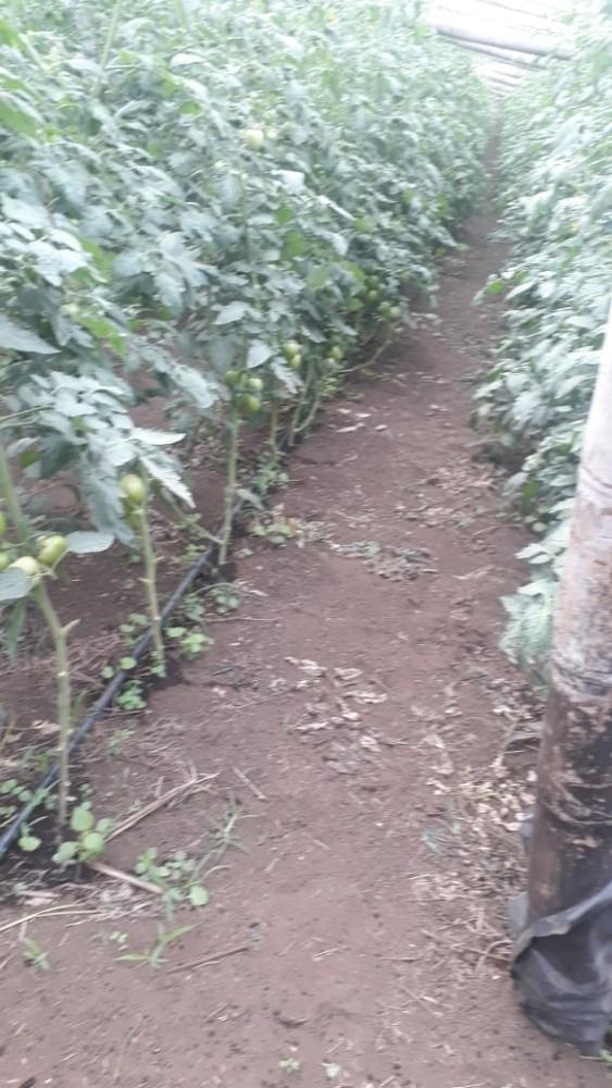 finca espectacular cultivable